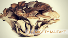Get to Know a Mushroom – The Mighty Maitake