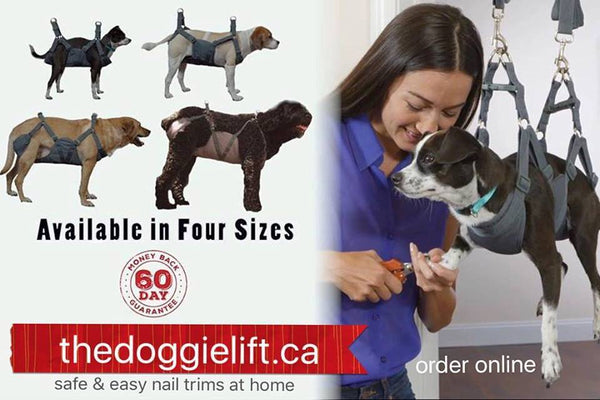 doggie lift, dog sling, at home dog grooming device to keep a dog immobile & cooperative for nail trim, ear cleaning, injections, grooming, teeth cleaning