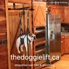 The Doggie Lift Complete Package 1 (Most Popular)
