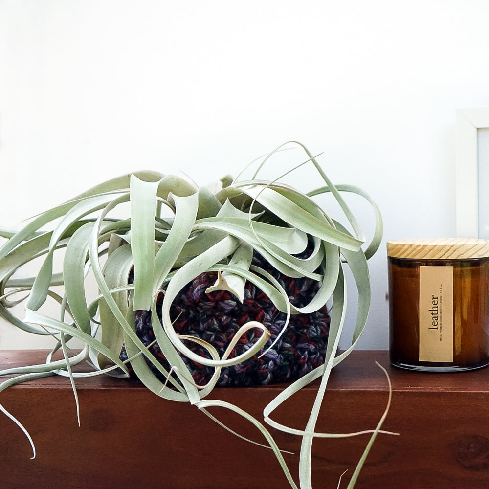 Large Hanging Air Plant Sweater with Plant