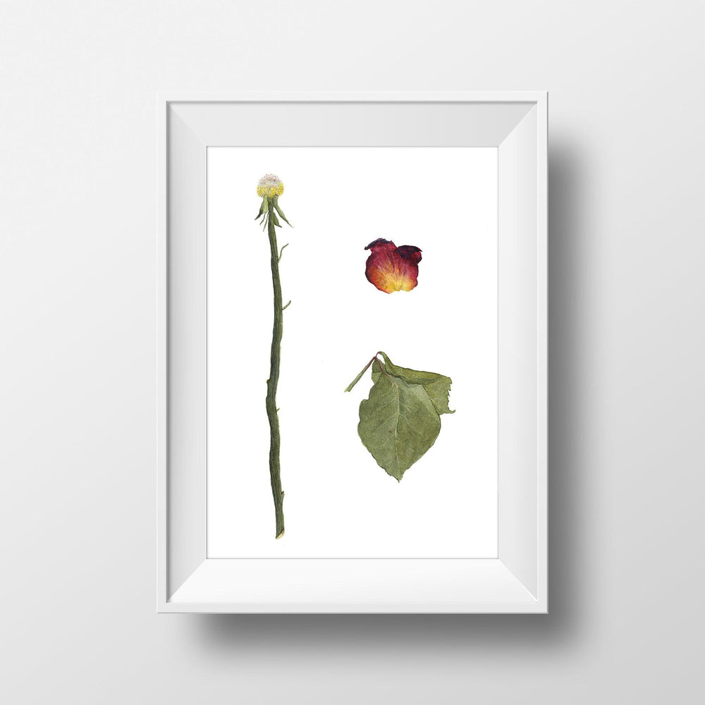 Rose Watercolor Art Print