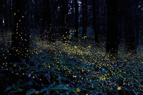 Surf Coast Arts Trail, Aireys Inlet Primary School art installation, fireflies in the forest