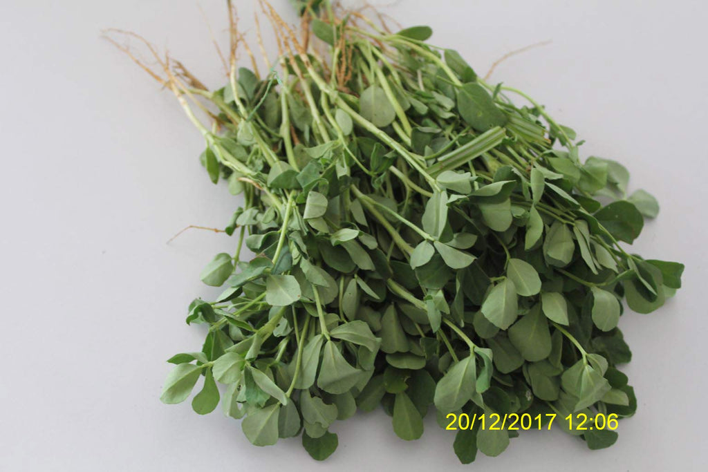 Refresh Bag test result of Methi leaves on 1st Day