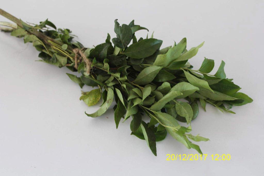 Refresh Bag test result of Curry leaves on 1st Day