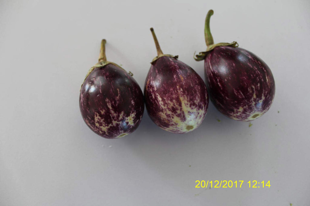 Refresh Bag test result of Brinjal on 1st Day