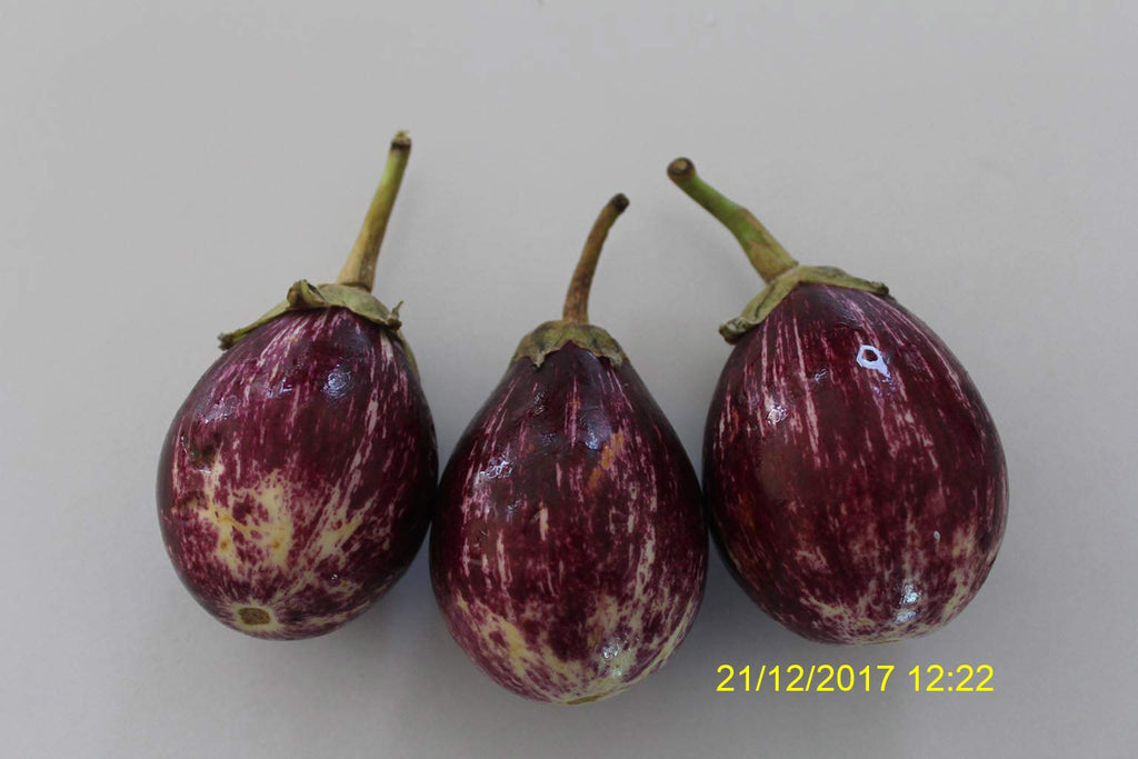Refresh Bag test result of Brinjal on 2nd Day