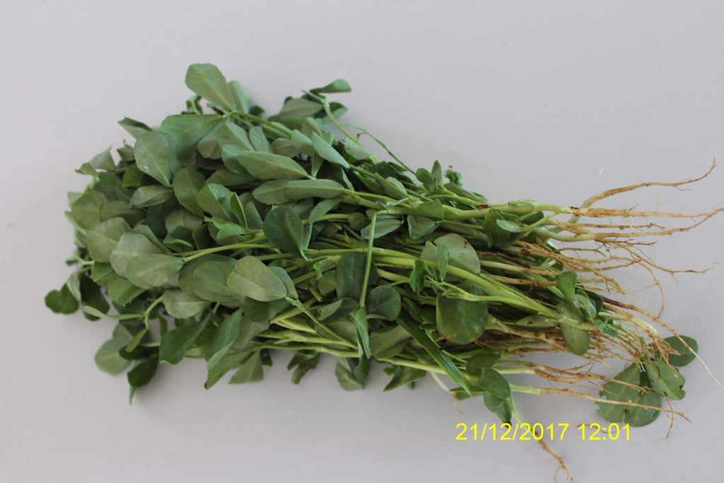 Refresh Bag test result of Methi leaves on 2nd Day