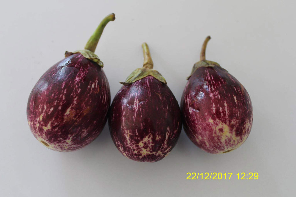 Refresh Bag test result of Brinjal on 3ed Day
