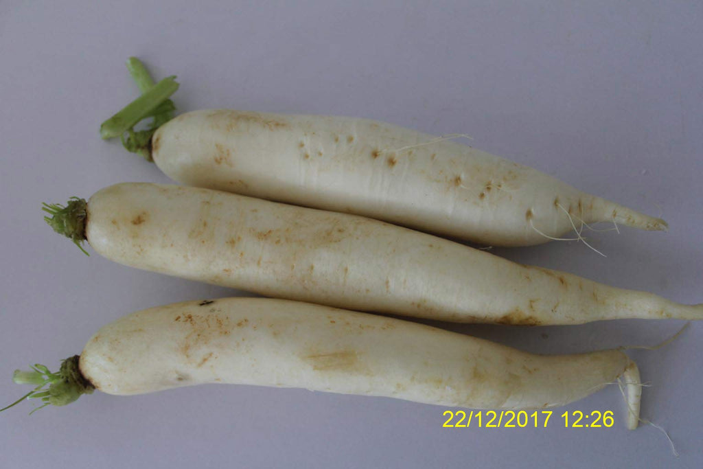 Refresh Bag test result of Radish on 3ed Day