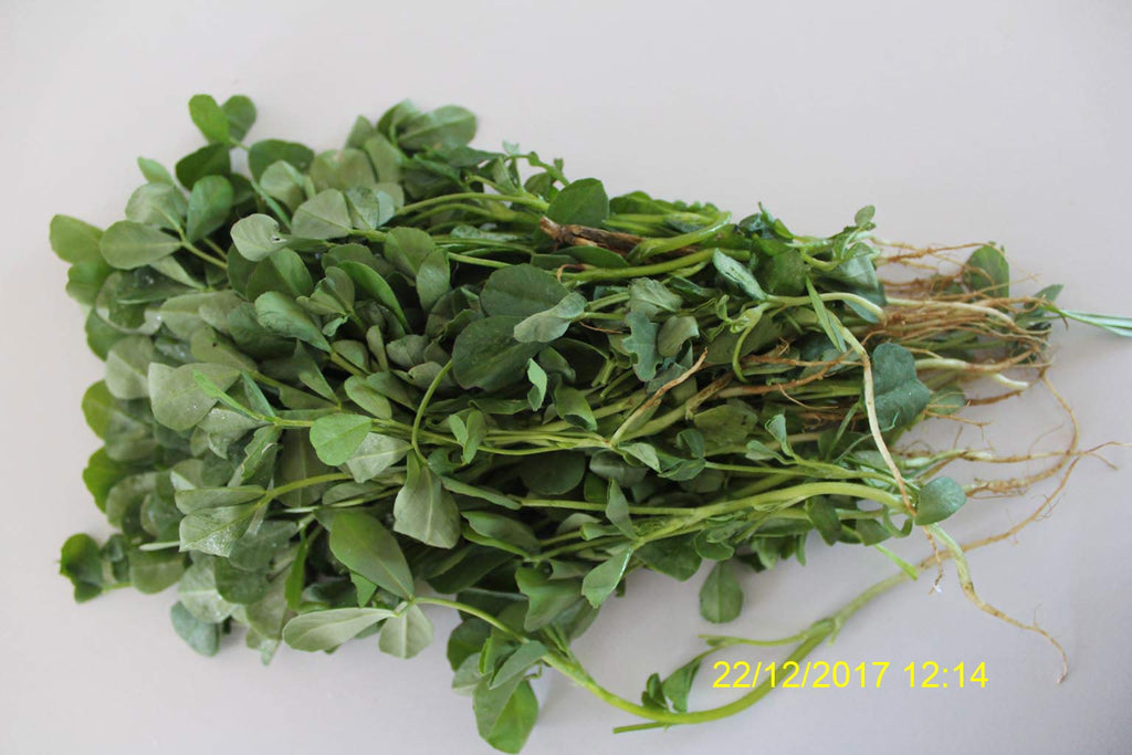Refresh Bag test result of Methi leaves on 3ed Day
