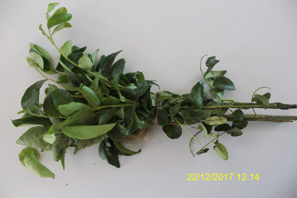 Refresh Bag test result of Curry leaves on 3ed Day