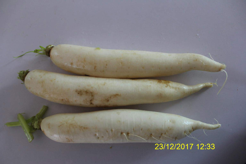 Refresh Bag test result of Radish on 4th Day