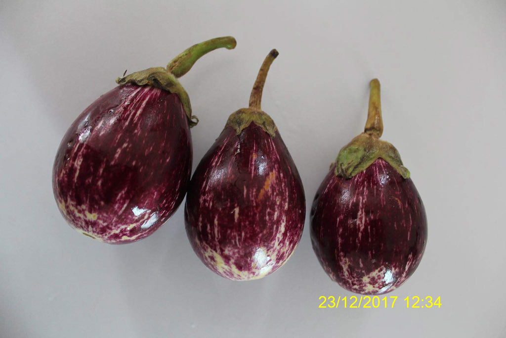 Refresh Bag test result of Brinjal on 4th Day
