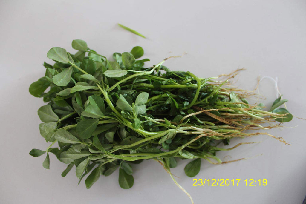Refresh Bag test result of Methi leaves on 4th Day