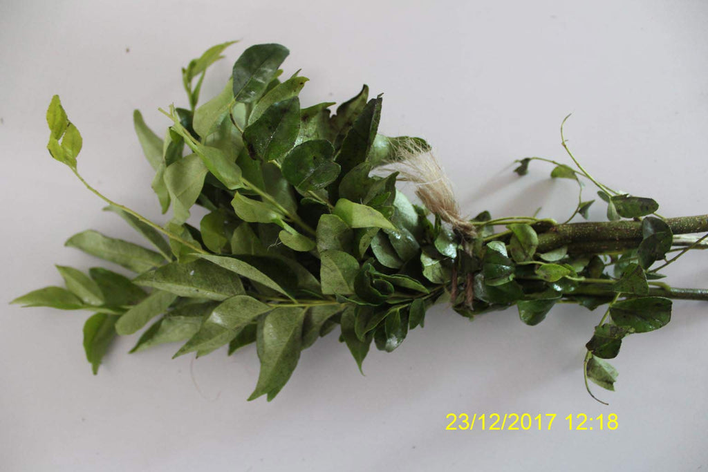 Refresh Bag test result of Curry leaves on 4th Day