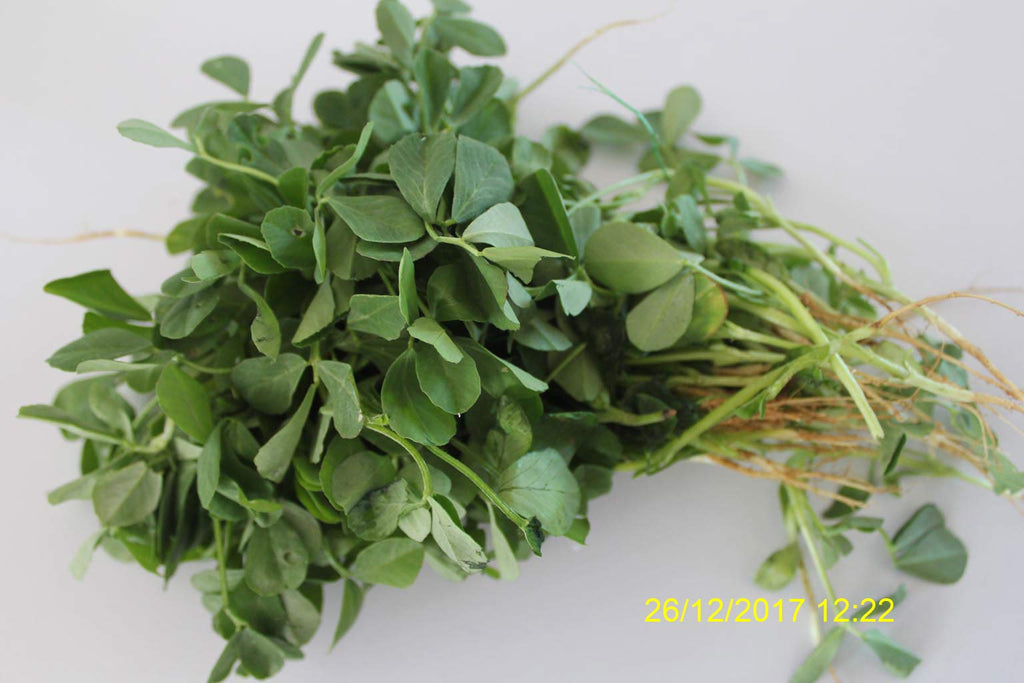Refresh Bag test result of Methi leaves on 5th Day