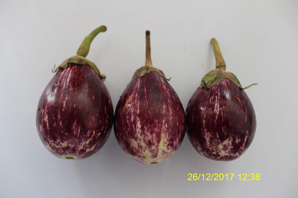 Refresh Bag test result of Brinjal on 5th Day