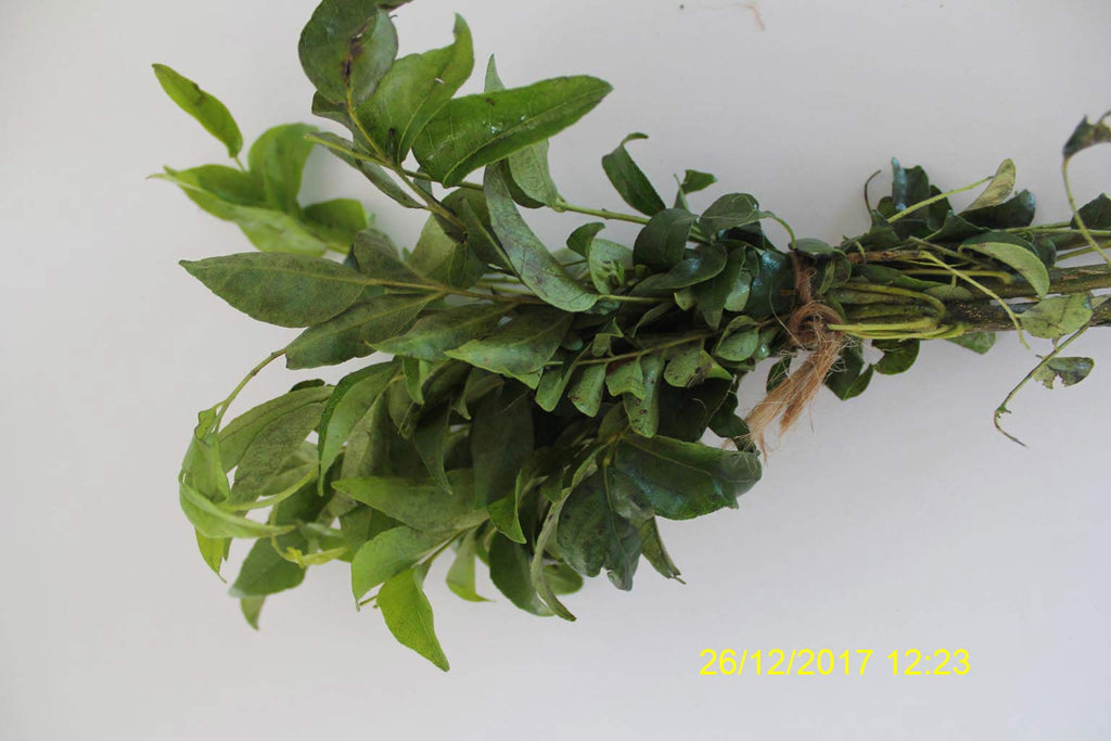 Refresh Bag test result of Curry leaves on 5th Day