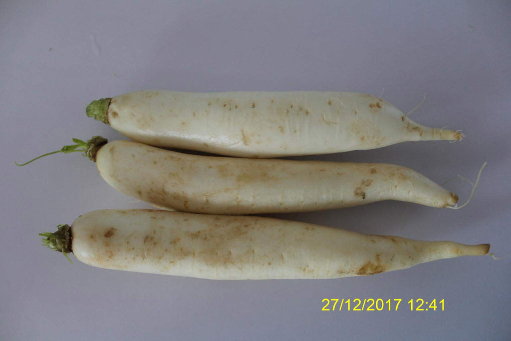 Refresh Bag test result of Radish on 6th Day