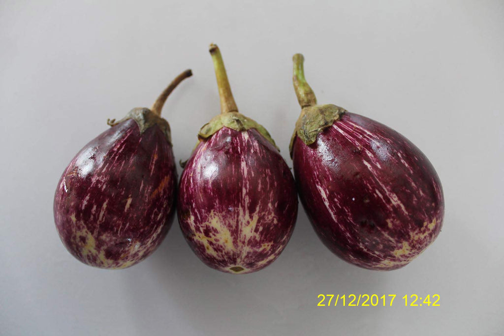 Refresh Bag test result of Brinjal on 6th Day