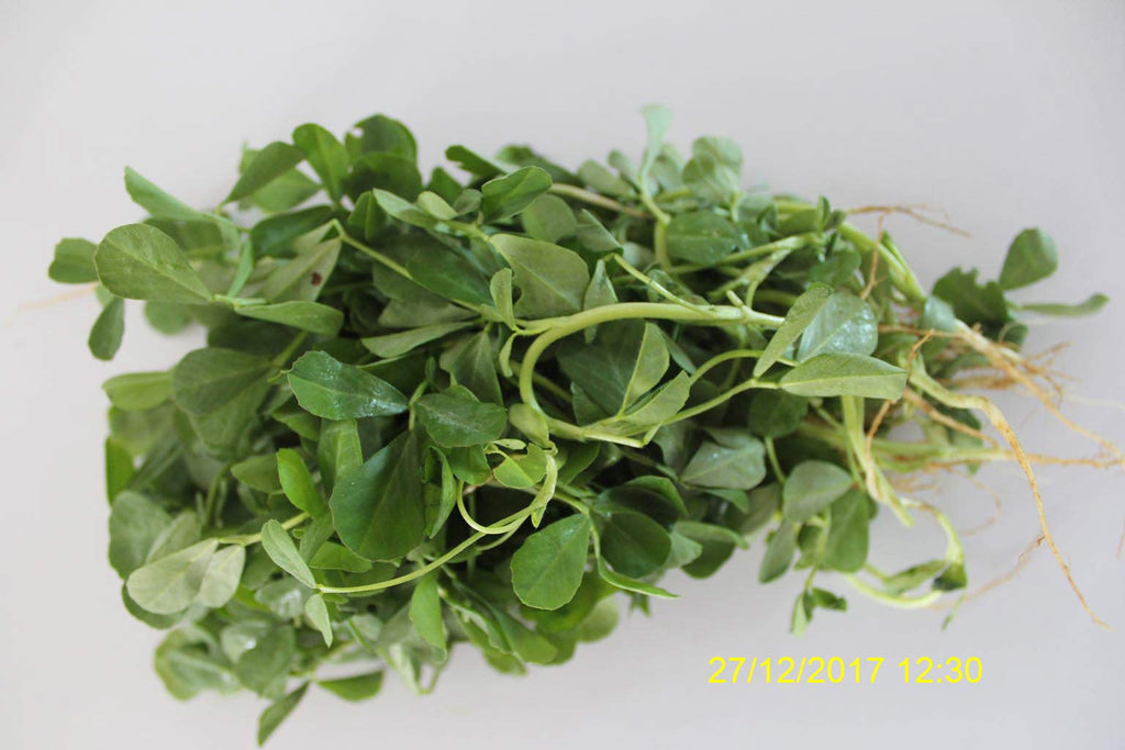 Refresh Bag test result of Methi leaves on 6th Day