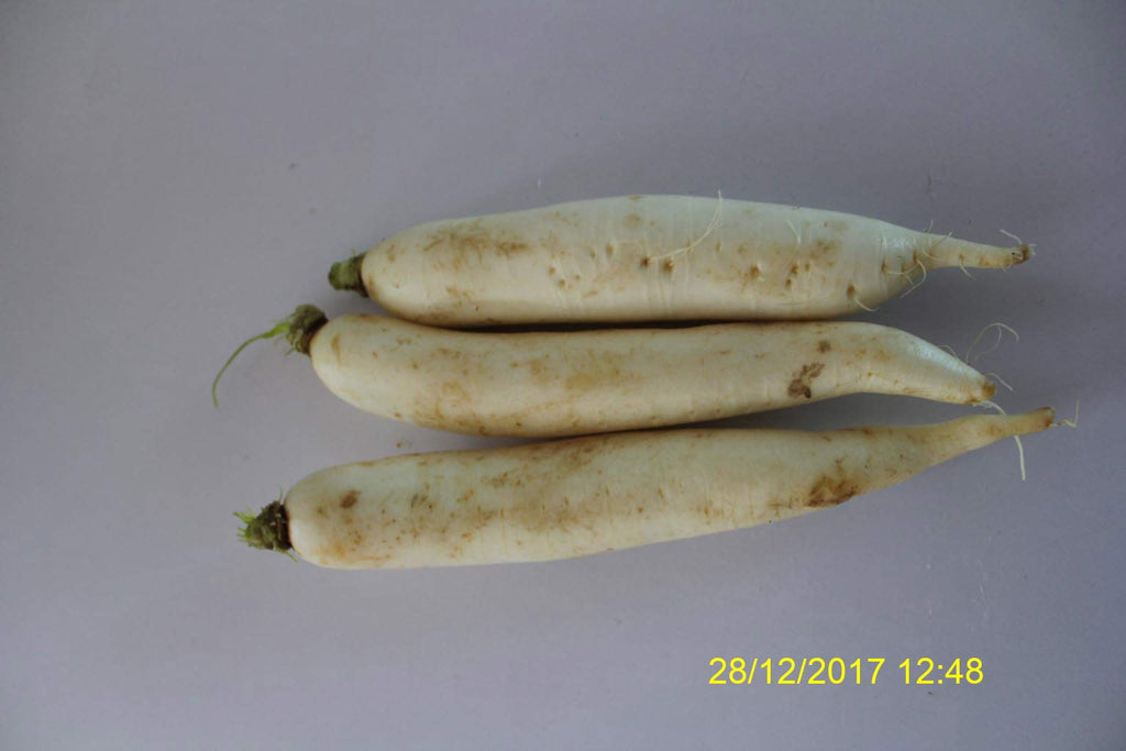Refresh Bag test result of Radish on 7th Day