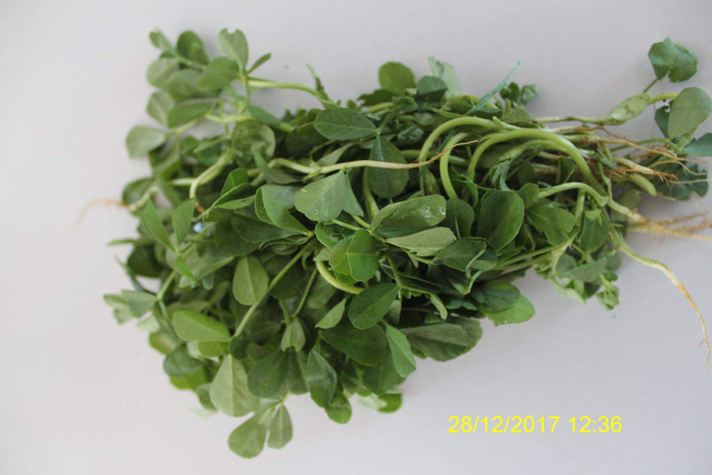 Refresh Bag test result of Methi leaves on 7th Day