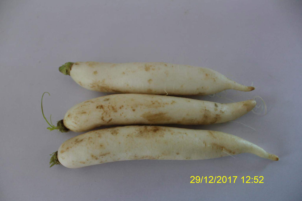 Refresh Bag test result of Radish on 8th Day