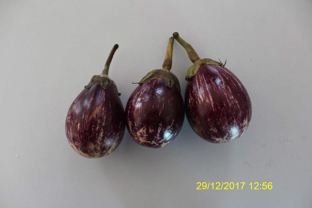 Refresh Bag test result of Brinjal on 8th Day