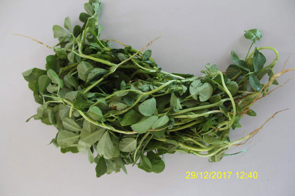 Refresh Bag test result of Methi leaves on 8th Day