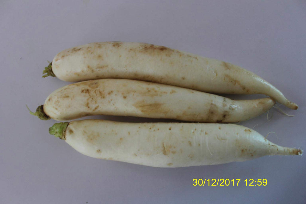 Refresh Bag test result of Radish on 9th Day