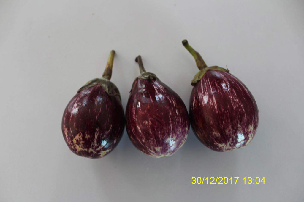 Refresh Bag test result of Brinjal on 9th Day