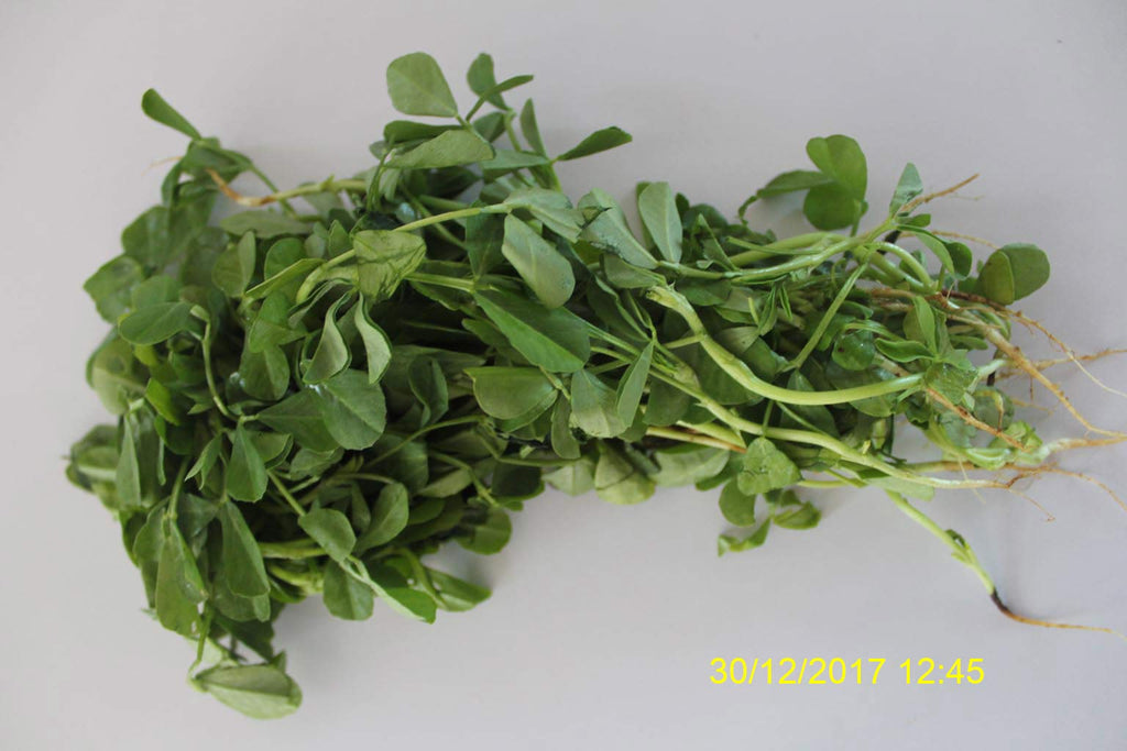Refresh Bag test result of Methi leaves on 9th Day