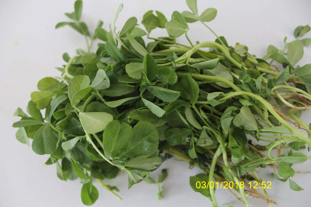 Refresh Bag test result of Methi leaves on 10th Day