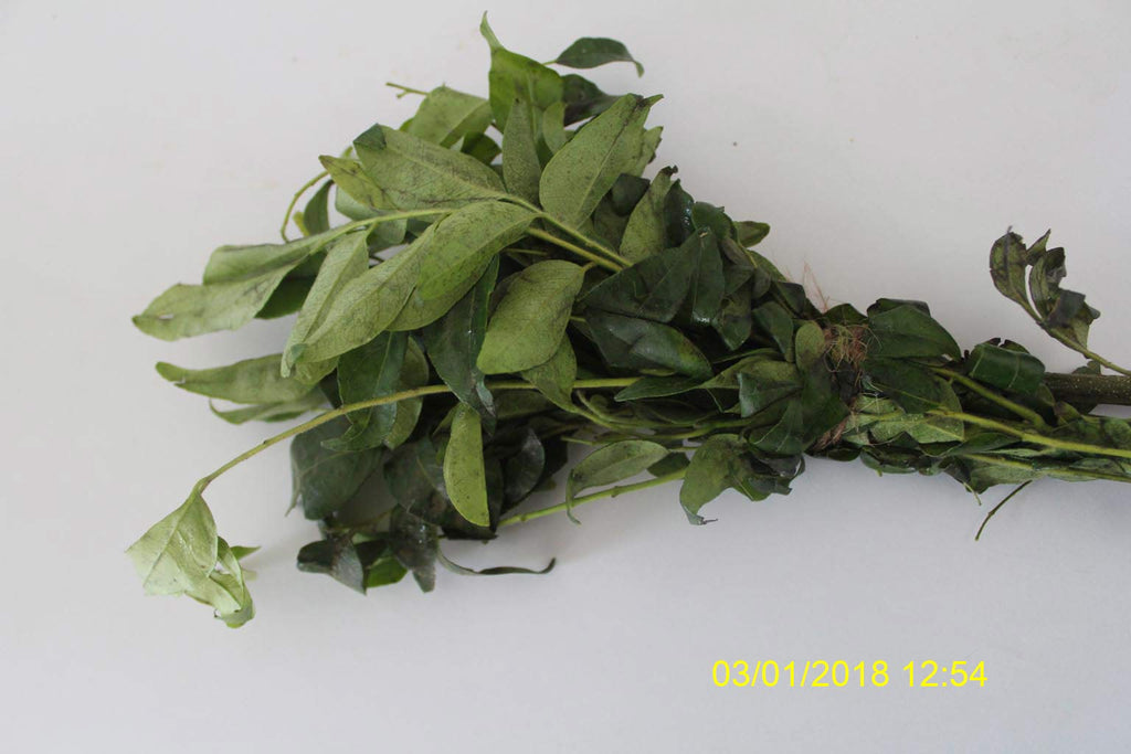 Refresh Bag test result of Curry leaves on 10th Day