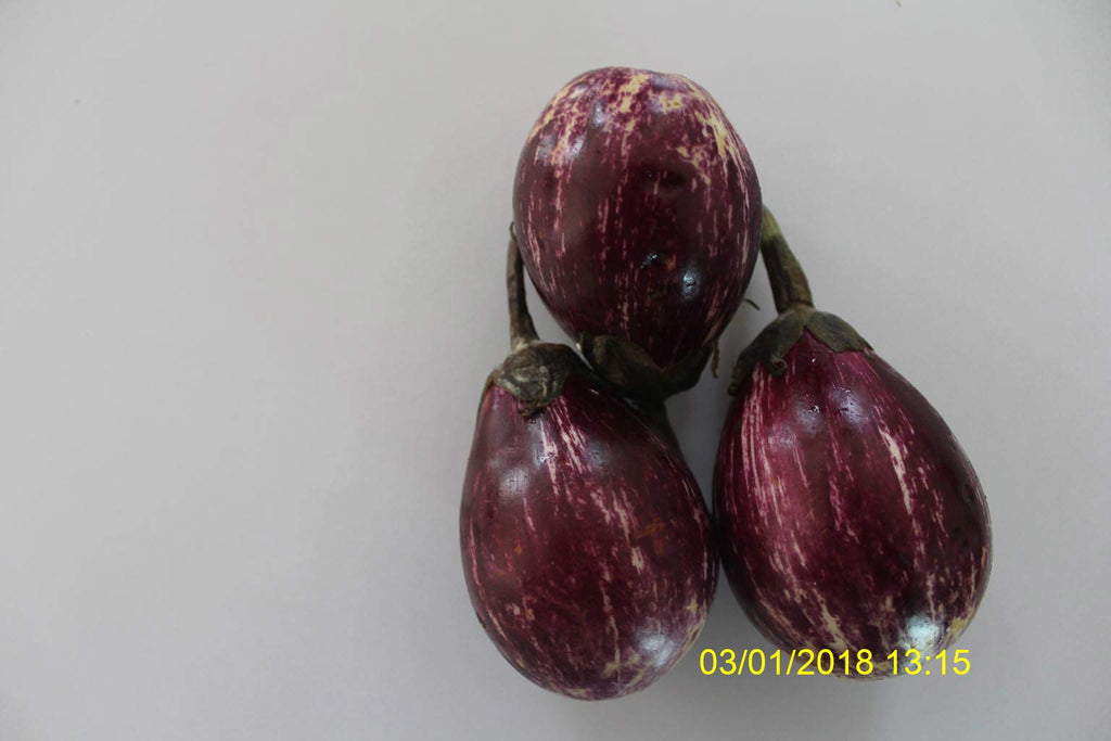 Refresh Bag test result of Brinjal on 10th Day