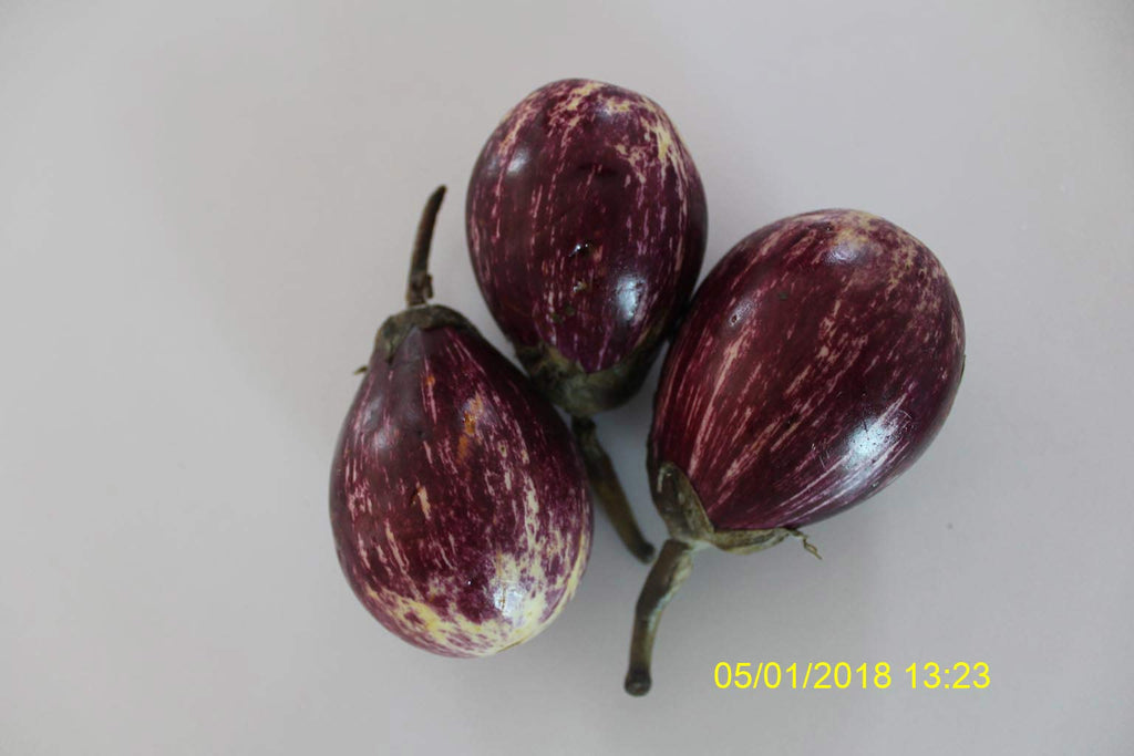 Refresh Bag test result of Brinjal on 11th Day