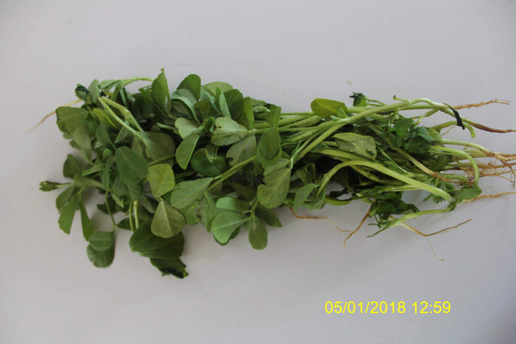 Refresh Bag test result of Methi leaves on 11th Day