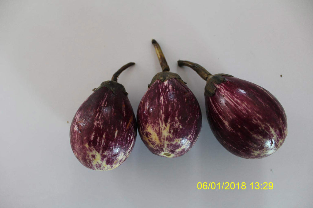 Refresh Bag test result of Brinjal on 12th Day