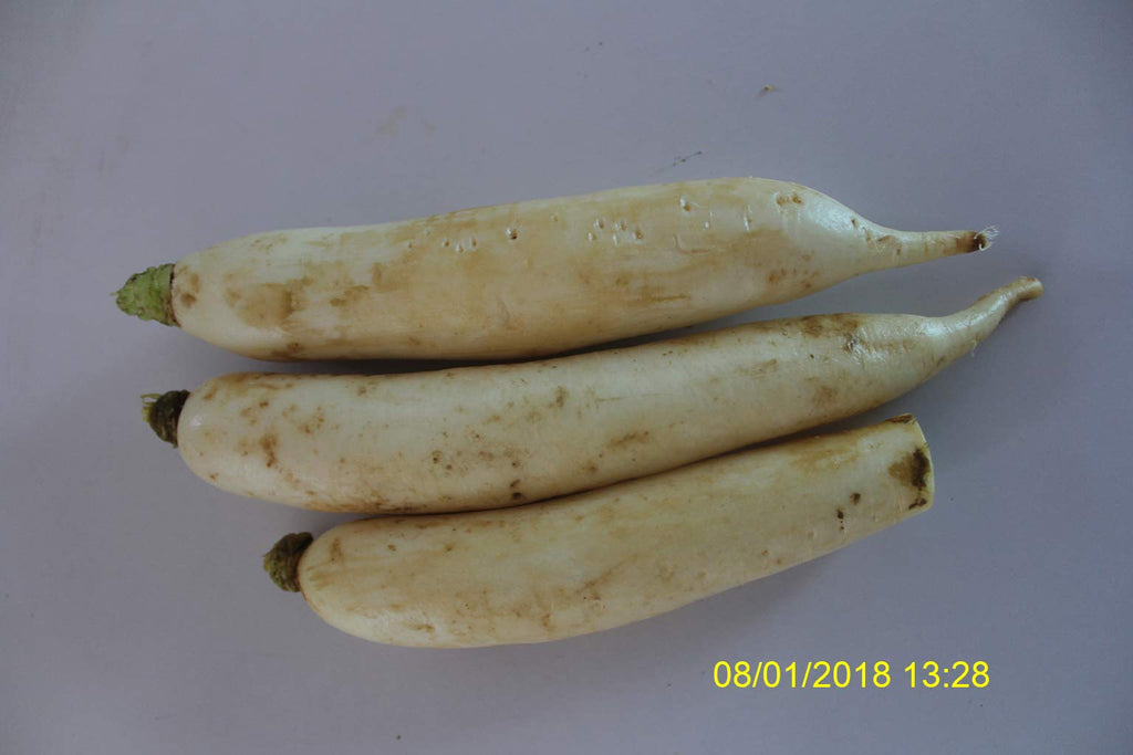 Refresh Bag test result of Radish on 13th Day