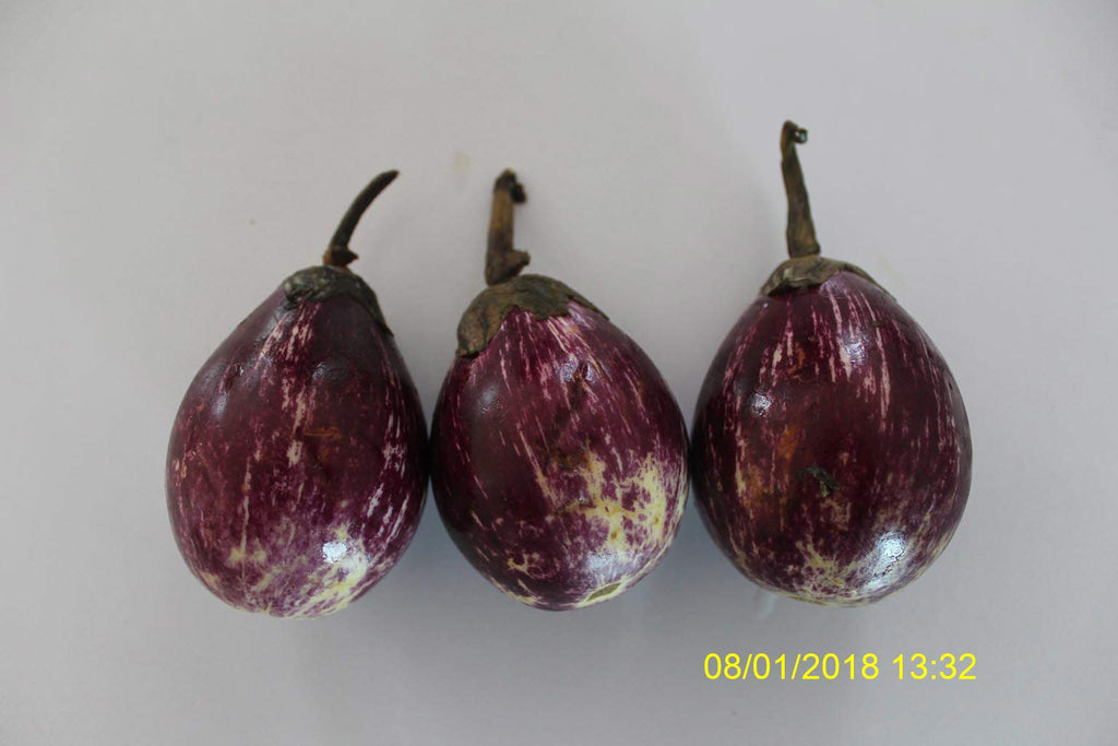 Refresh Bag test result of Brinjal on 13th Day