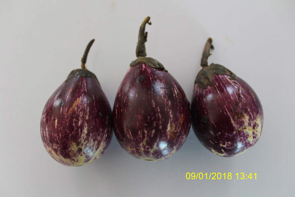 Refresh Bag test result of Brinjal on 14th Day