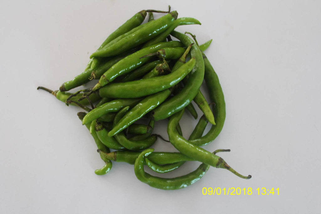 Refresh Bag test result of Chilies on 14th Day
