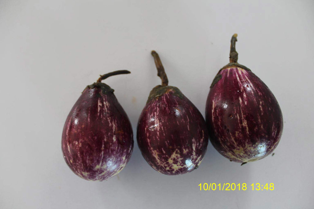 Refresh Bag test result of Brinjal on 15th Day