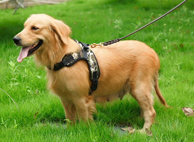 Oxford Halter - Sturdy Dog Harness