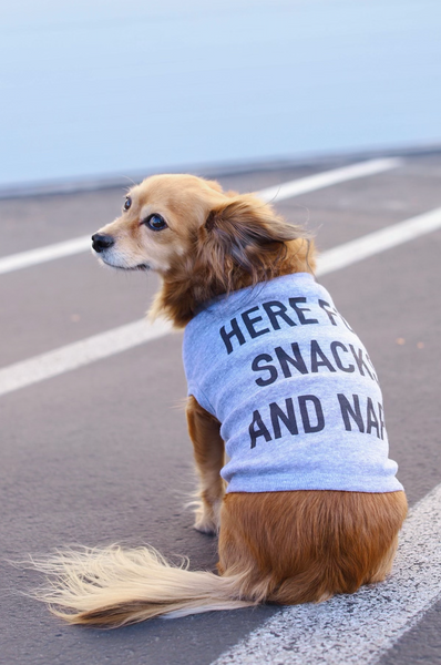 Here For Snacks and Naps - Pet Clothing