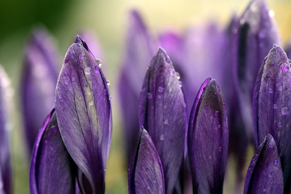 The Meaning Behind The Popular Saying April Showers Bring May Flowers
