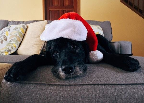 Christmas Goes To The Dogs