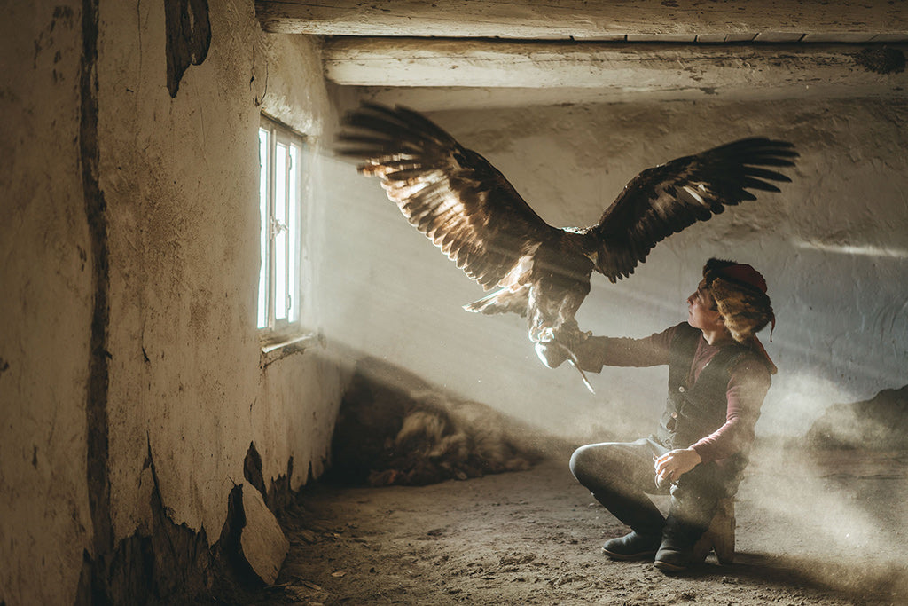 Mongolian hunting eagle spreads its wing to take flight from tribe members arm in a sun filled dusty room