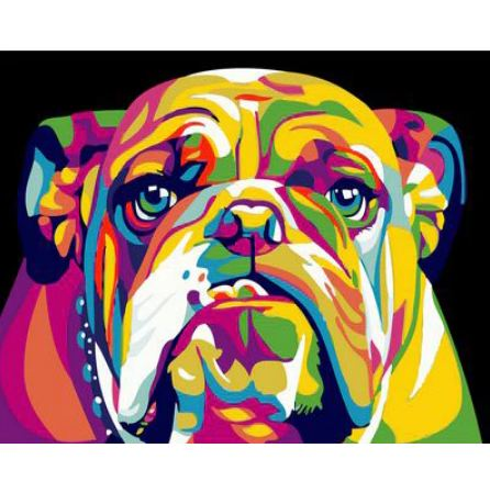 Rainbow Bulldog - Paint by Number kit